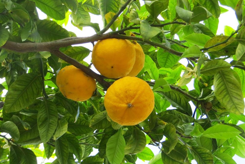 foto: kaulon.com