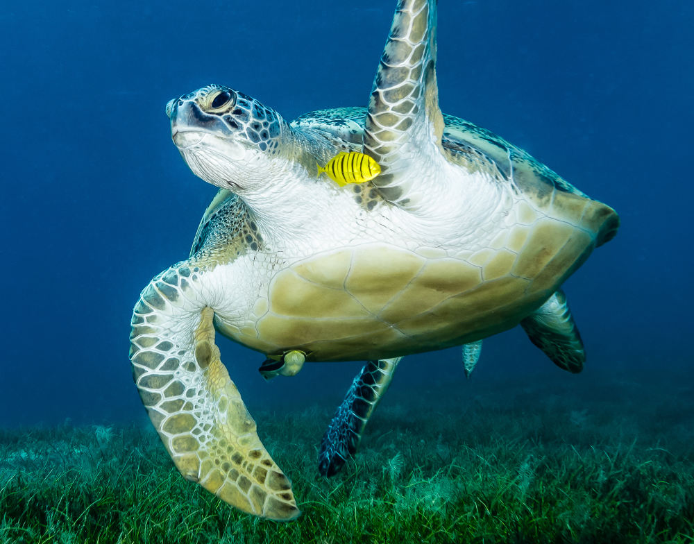 L aquario di genova la tua italia for Acquario tartarughe grandi