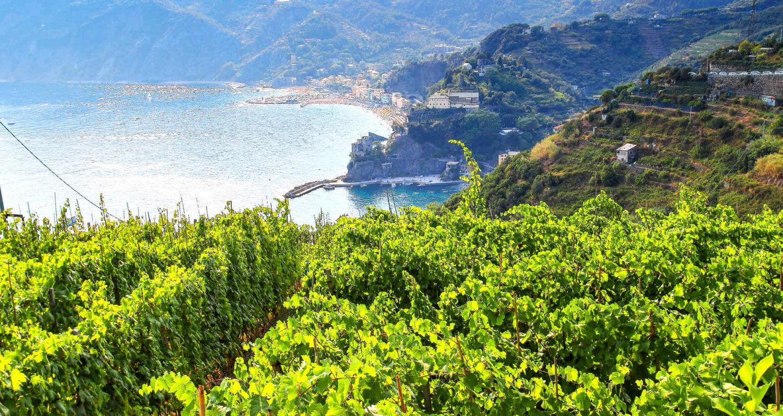 Лучшие сорта итальянских вин
