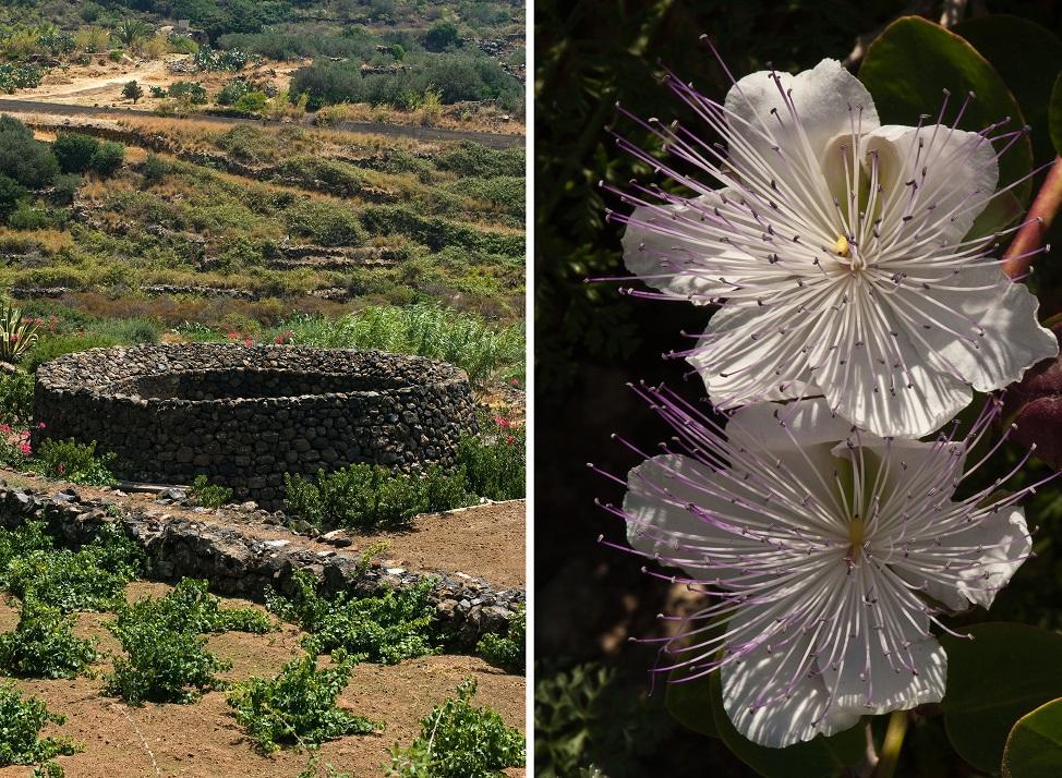 CF5AWE Pantellerian Garden, Pantelleria Island, Trapani, Sicily, Italy